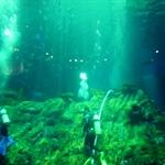 海洋公园海洋馆潜水员.jpg