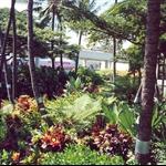 Honolulu_airport.jpg