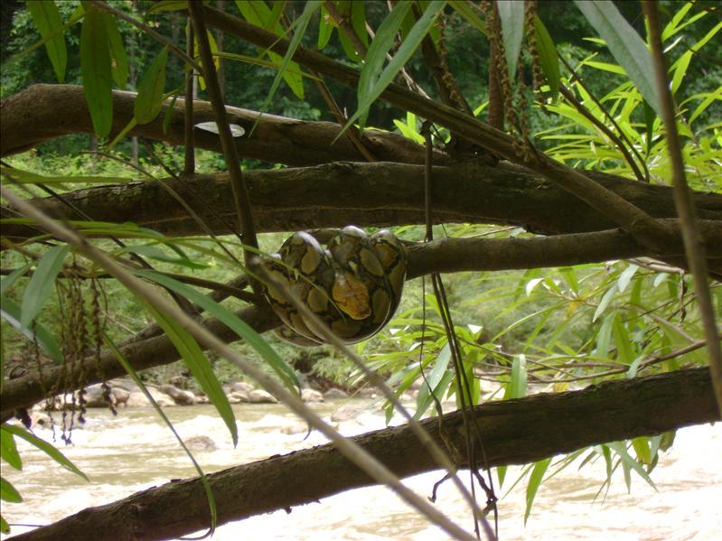 Python, Pai River