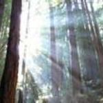 sun rays thru trees.jpg