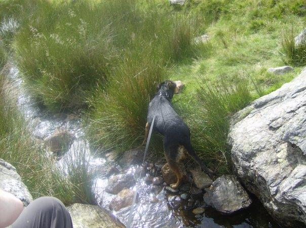 Brandy having a dip!