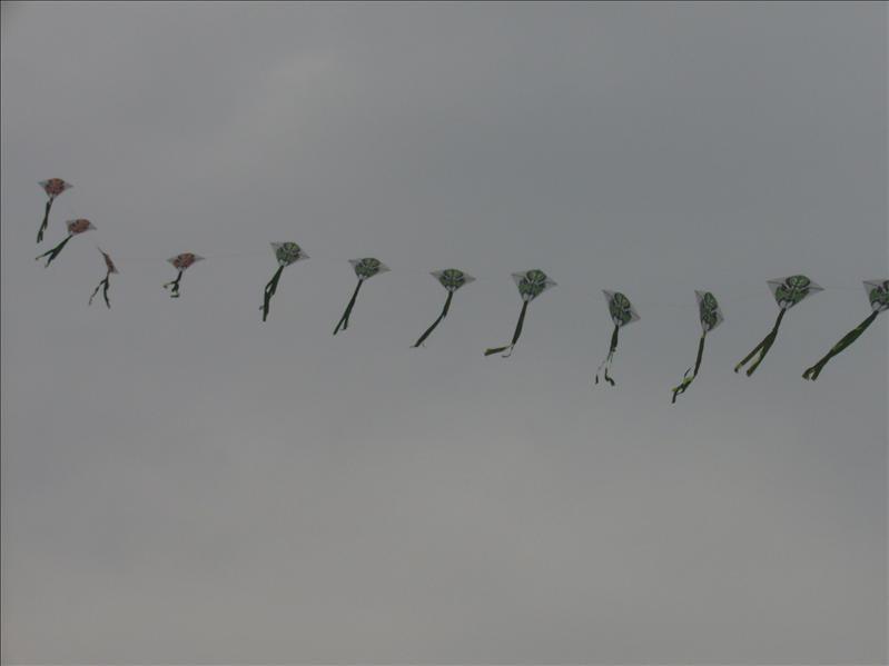 長長的風箏 @ 青島奧帆中心