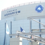 Virginia Aquarium & Marine Science Center.jpg