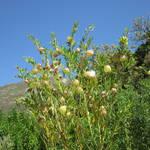 kaapstad-Kirstenbosch botanical garden