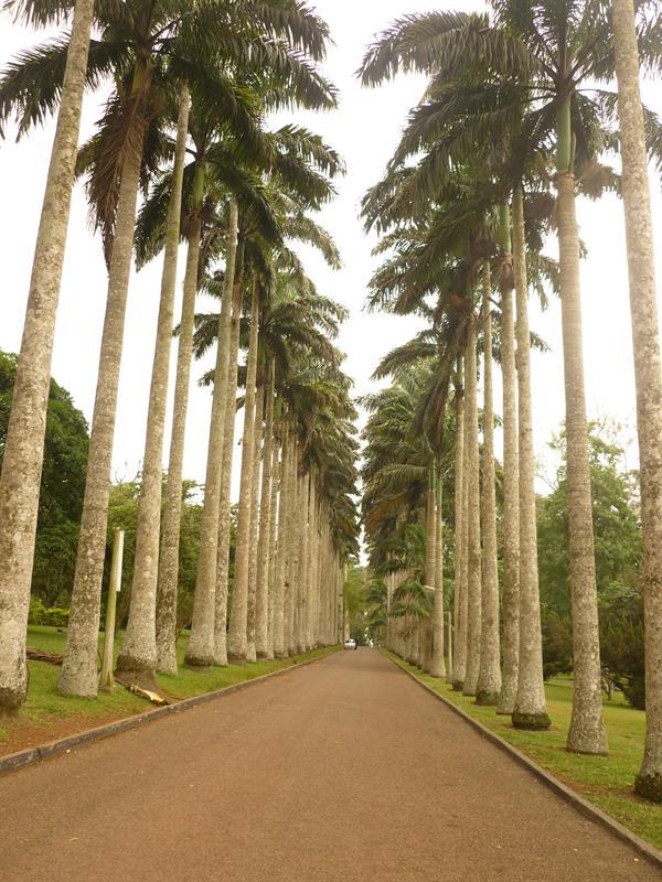 Aburi - Botanischer Garten