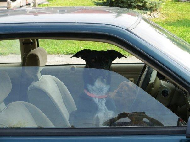 WOW a dog's car
