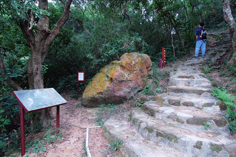 轉上鷹巢山自然教育徑 At the junction of Eagle's Nest Nature Trail