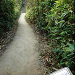 衛奕信徑第ㄧ段途經紫羅蘭山徑