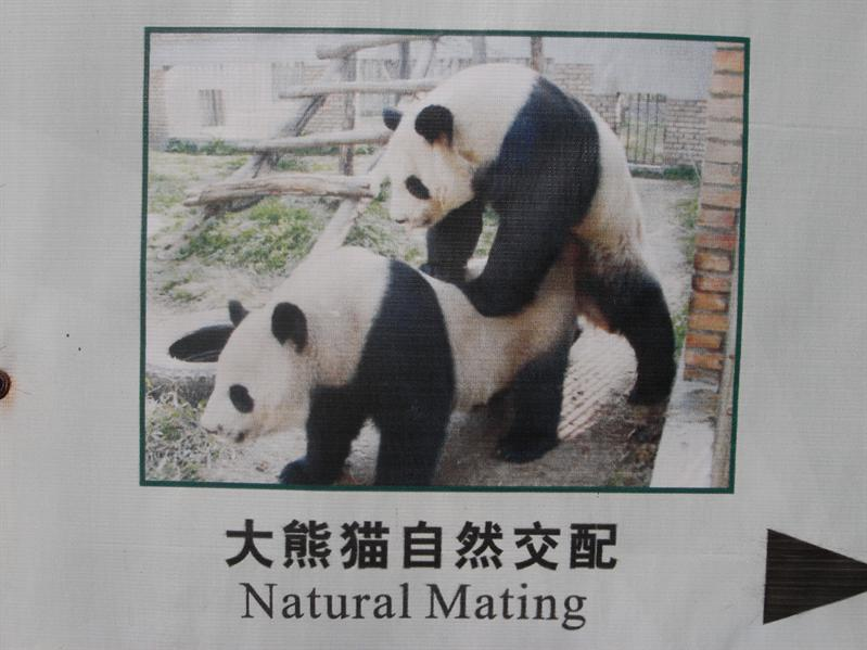 SEXUAL HARASMMENT PANDA