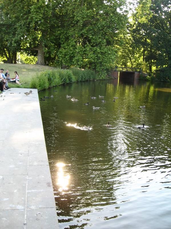 Pond behind Charlottenburg palace