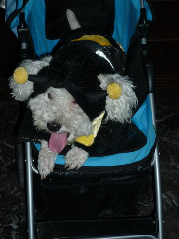 Their poor dog dressed as a bee...