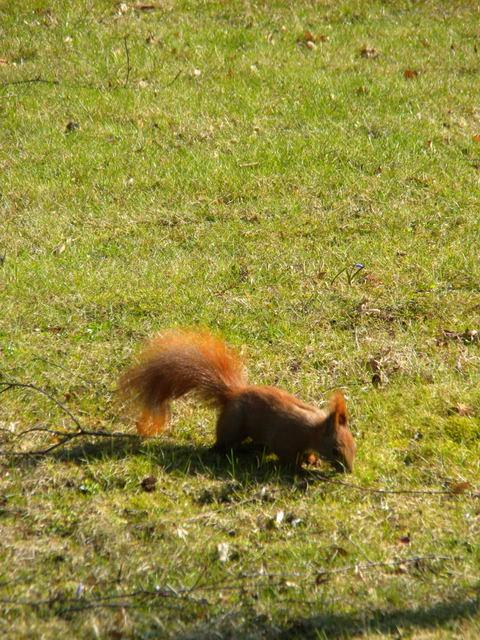 Good to see a red squirrel somewhere other than the Isle of Wight
