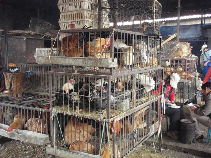 live animal market, Lijiang
