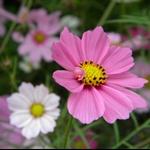 春遊清遠-賞花觀景