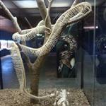 Ægte slange skelet