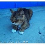 人魚與貓5.JPG