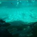 Underwater stream.jpg