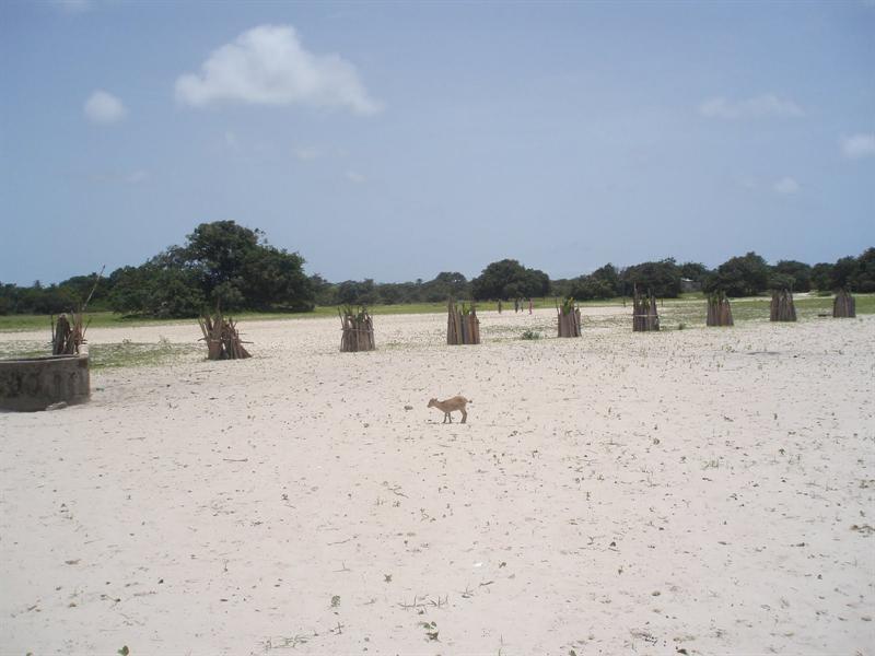 Isla de Hitou