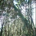 嵐亭往森林浴步道 (34).JPG
