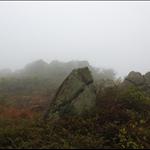 DSC_1127 大籃蓋北坡石林.jpg