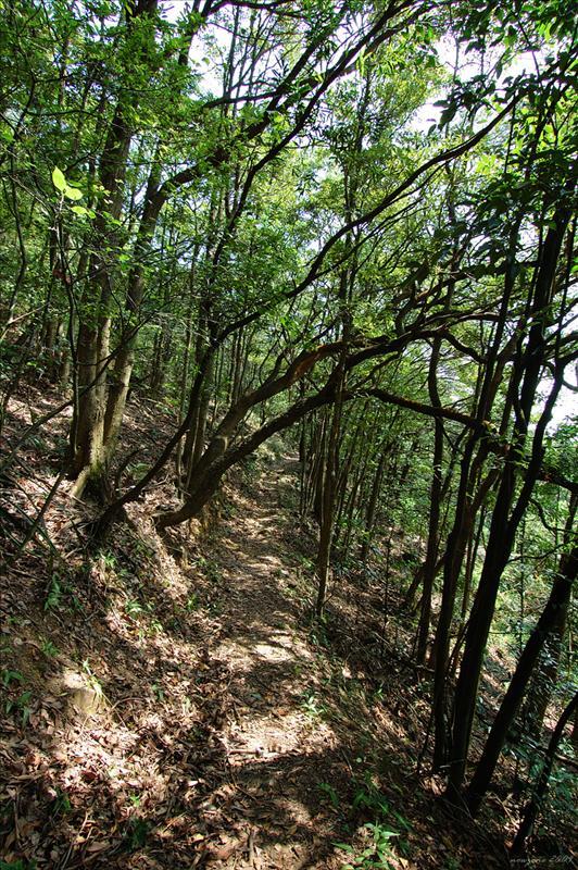 相思林徑 Acacia Confuse Trail