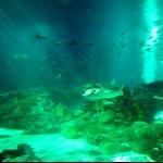 海洋公园海洋馆鱼群.jpg