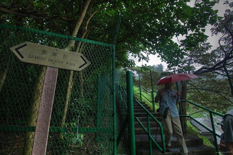 經龍躍徑 Leaping Dragon Walk