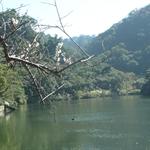 慈湖 (16).JPG
