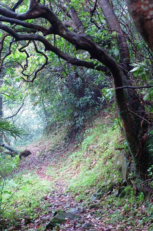 落蓮北林徑 Lin Pak Forrest Trail