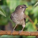 Bird 1.jpg