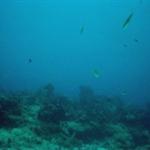 under water 7