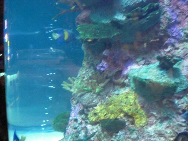 Aquarium @ Rainforest Cafe in MGM Grand