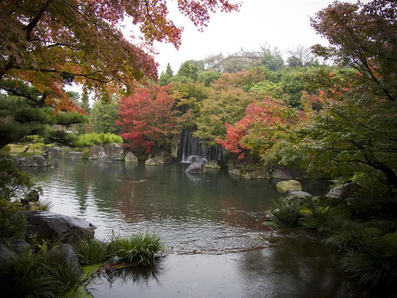 Momiji in Kokoen Park