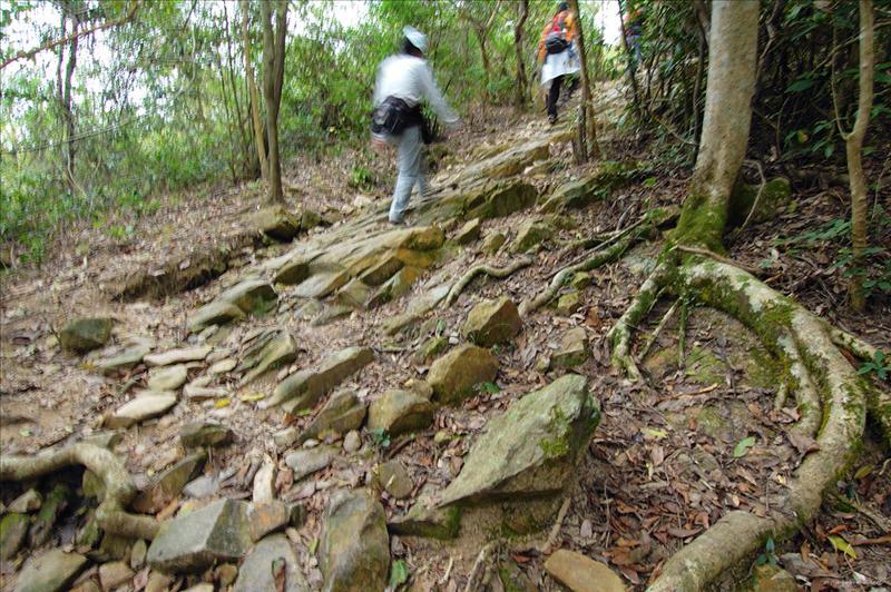 接山徑上橫嶺