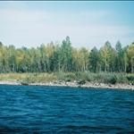 Habahe Birch Park 哈巴河樺林公園