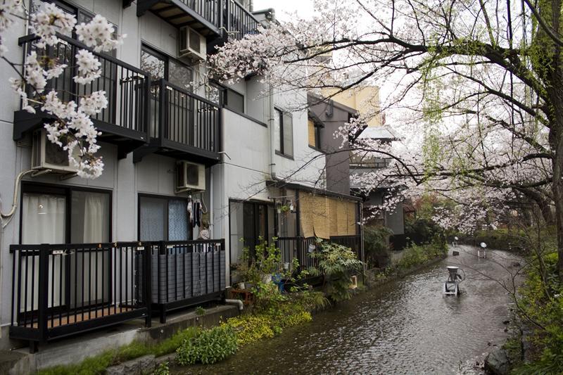 Hanami in rainy Kyoto