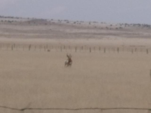 Deer relation