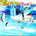 海洋公园海洋剧场海豚表演1.jpg