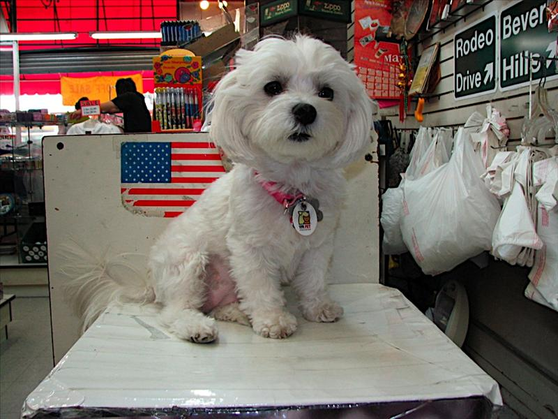 His name was Popcorn, in a Hollywood souvenir shop