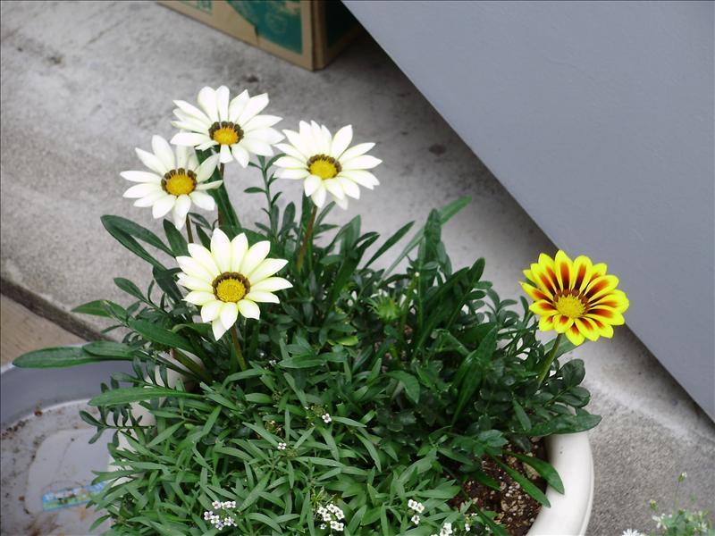 民宿外的花