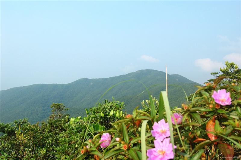 Mount Collinson at the right 右望歌連臣山