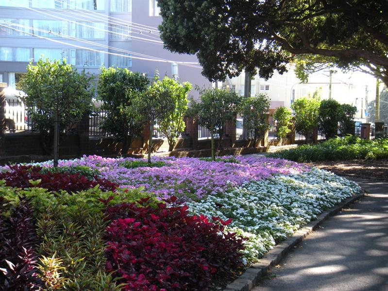 Beautiful flower beds at the Wellington Botanical Gardens