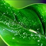 green033.jpg