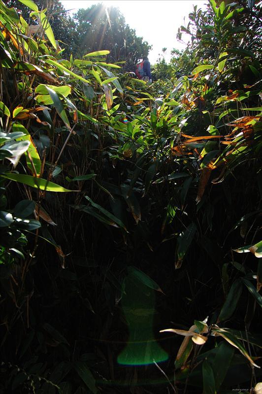 上到石芽山第一峰又要入竹林