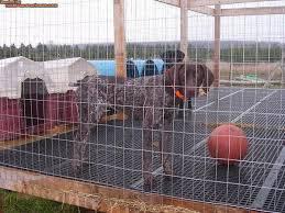 flooring for dog kennel..jpg