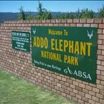Wild Coast // Addo Elephant Park
