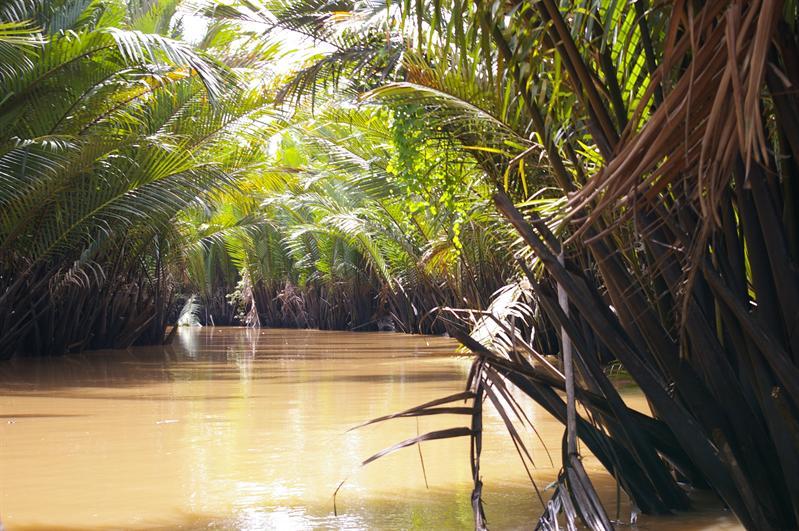Vegetación en torno al río