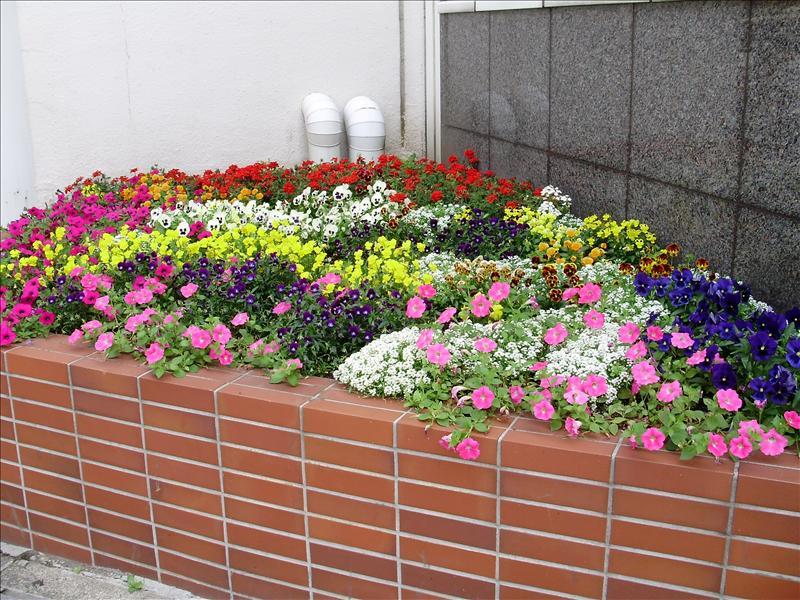 漂亮的花叢2