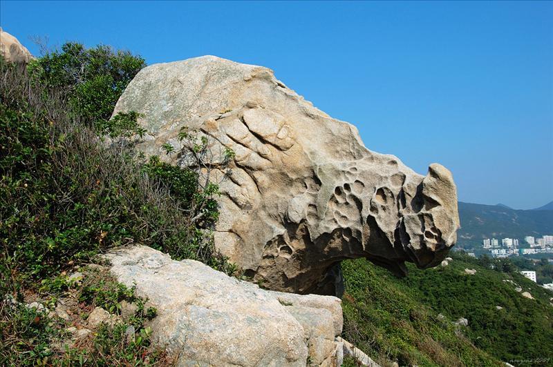 犀牛石 Rhino Rock