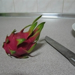 Dragon Fruit-smoczy owoc